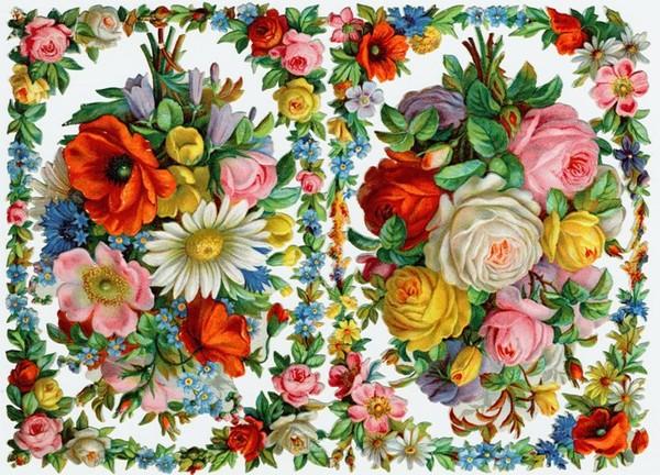 Images anciennes fleurs