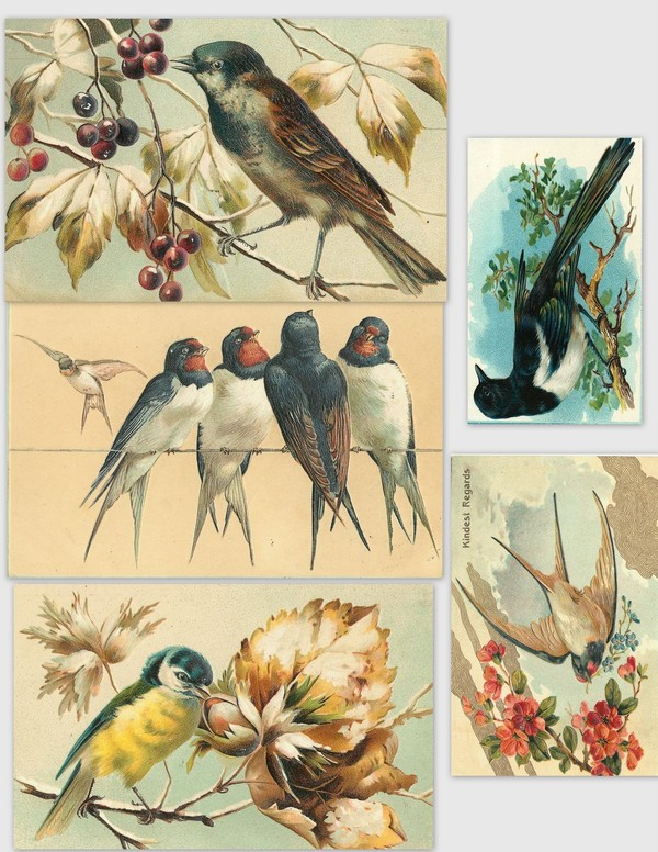 Images anciennes oiseaux